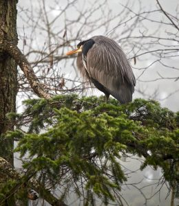 bird nest surveys