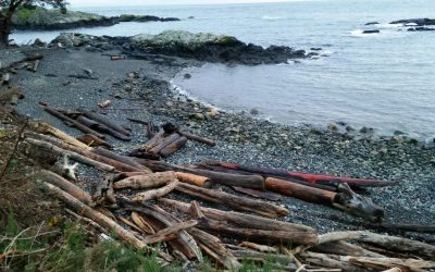 Shoreline Protection Project