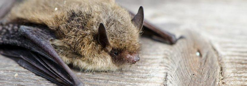 Acoustic Bat Monitoring