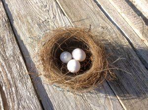bird nesting season