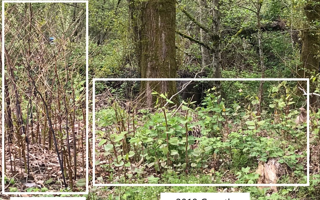 Mitigating Invasive Species Damage