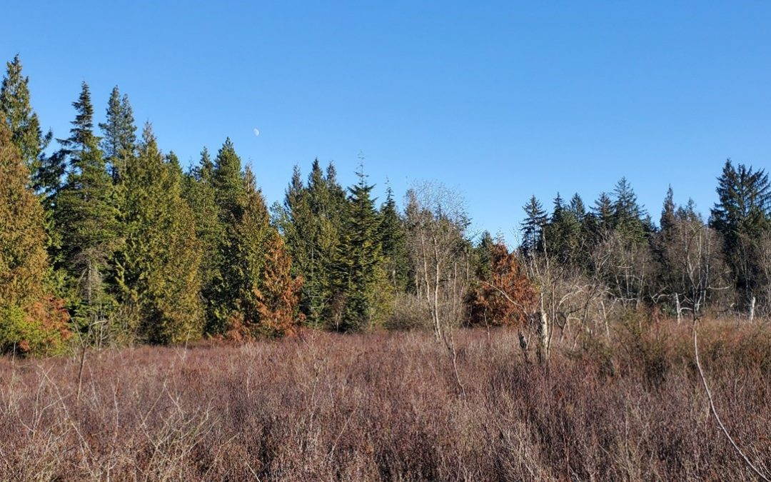 British Columbia Wetlands | A Cause for Celebration